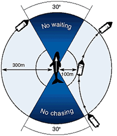 Avistamiento-ballena-azul